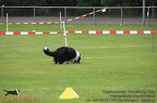 OBEDIENCE EVENTS 2013