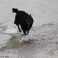 IMG2012-03-06 001 Hunde