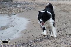 IMG2012-03-06 002 Hunde