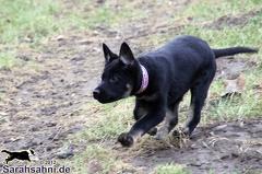 IMG2012-03-06 003 Hunde