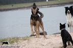 IMG2012-03-06 004 Hunde