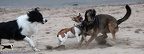 IMG2012-03-06 005 Hunde