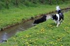 Spielen im Reiche des Wassers -- 22.04.2012