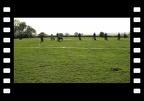 Obedience-Prüfung - BUTTON - Beginner - 10.04.2011 - Zülpich - Gruppenübungen